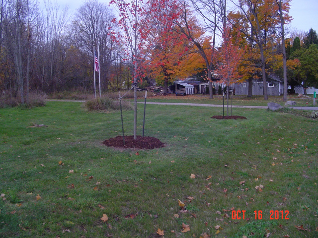 2012 Village of Dimondale Tree Planting